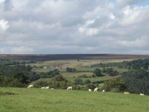 Moorland general image